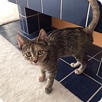Adopt A Pet :: Desiree - Bentonville, AR