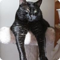 Adopt A Pet :: Bartholomew - Vancouver, BC