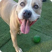 Adopt A Pet :: Seven - Snohomish, WA
