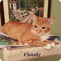 Adopt A Pet :: Cloudy - Bentonville, AR