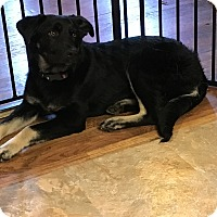 Adopt A Pet :: Selena - New Oxford, PA