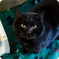 Adopt A Pet :: Bagheera - Greenwood, SC