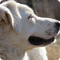 Adopt A Pet :: Shadow - Kyle, TX