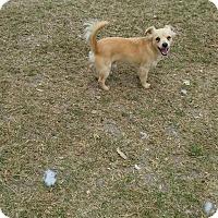 Adopt A Pet :: Toby - Charlestown, RI