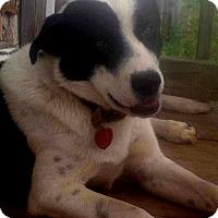 Adopt A Pet :: Milo - Buffalo, NY