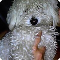 Adopt A Pet :: CASSIDY - Beverly Hills, CA