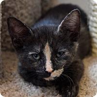 Adopt A Pet :: Cali - Island Park, NY