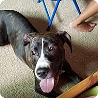 Adopt A Pet :: Lola - Lakeville, MN
