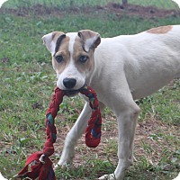 Terrier (Unknown Type, Medium) Mix Dog for adoption in Murphysboro, Illinois - Elana