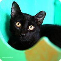 Adopt A Pet :: Archimedes - Tucson, AZ