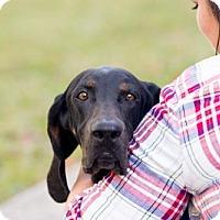 Adopt A Pet :: Hattie - Elkton, FL