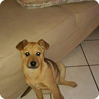 Adopt A Pet :: Charlie - LAKEWOOD, CA