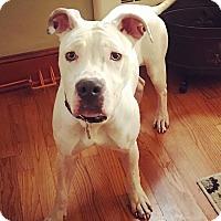 Adopt A Pet :: Coconut - Nashville, TN