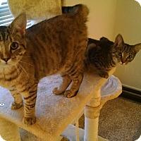 Adopt A Pet :: Jennifer and Paul - Richmond, VA