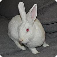 Adopt A Pet :: Lotus - Winfield, IL