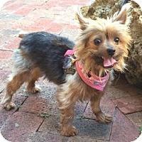 Adopt A Pet :: Cinda - Miami, FL