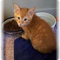 Adopt A Pet :: Kent - Shelton, WA