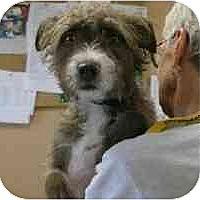 Adopt A Pet :: Pearl - Scottsdale, AZ