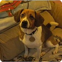Adopt A Pet :: Winston - Douglas, MA
