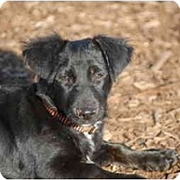Adopt A Pet :: demi - Ft. Myers, FL