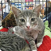 Adopt A Pet :: Jaso - Vero Beach, FL