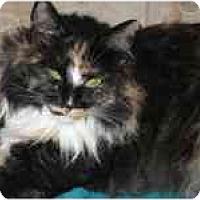 Adopt A Pet :: Kia - Davis, CA