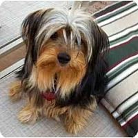 Adopt A Pet :: Champ - West Palm Beach, FL