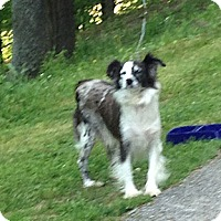 Adopt A Pet :: Mollie - Hazard, KY