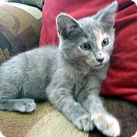 Adopt A Pet :: Mary Gold - Chandler, AZ
