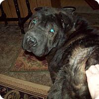 Adopt A Pet :: Neela - adopt pending - Mira Loma, CA