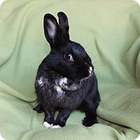 Adopt A Pet :: Brooklyn - Valley Center, CA