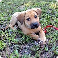 Adopt A Pet :: SANDY - Boca Raton, FL