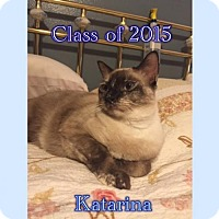 Siamese Cat for adoption in Houston, Texas - Katarina