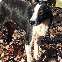 Adopt A Pet :: GIZMO - great dog! - Pewaukee, WI