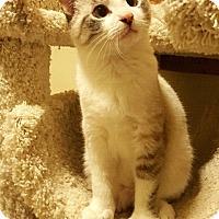 Adopt A Pet :: Betty - Addison, IL
