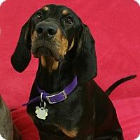 Adopt A Pet :: Lilly Ann - Lisbon, OH