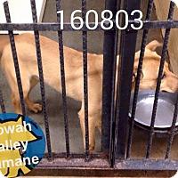 Adopt A Pet :: Chesney - Boston, MA
