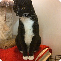 Adopt A Pet :: Spanky - Middletown, CT