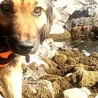 Adopt A Pet :: Lilly - Georgetown, CO