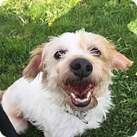 Adopt A Pet :: George (and Ozzie) - Lansing, MI