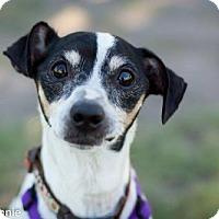 Adopt A Pet :: Russell - Tucson, AZ