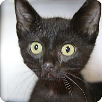 Adopt A Pet :: Willard - Sarasota, FL
