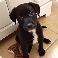 Adopt A Pet :: Jet - Bedford, VA