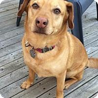 Adopt A Pet :: DAISY - Winnipeg, MB