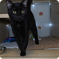 Adopt A Pet :: Binx - New Castle, PA