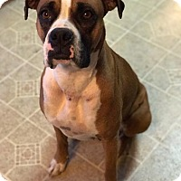Adopt A Pet :: Precious - WESTMINSTER, MD