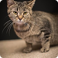 Adopt A Pet :: Alice - Madionsville, KY