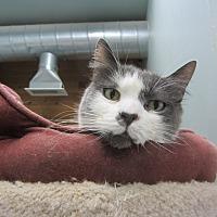 Adopt A Pet :: Penny - Kingston, WA