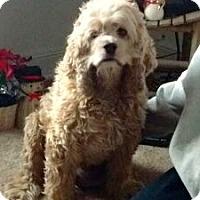 Adopt A Pet :: Deuce - Delaplane, VA