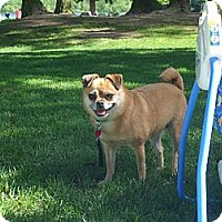 Adopt A Pet :: Pixie - Puyallup, WA